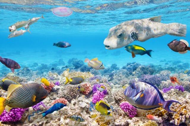 Andaman Islands sea life