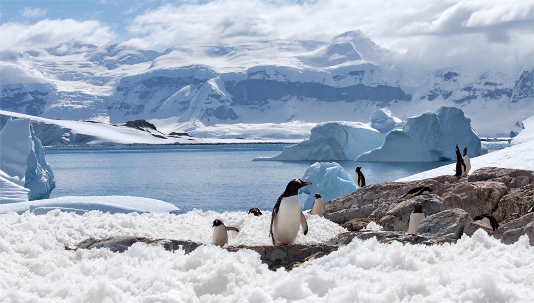 Antarctica landscape with penguins