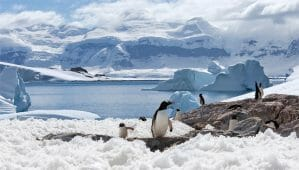Antarctica landscape with penguins