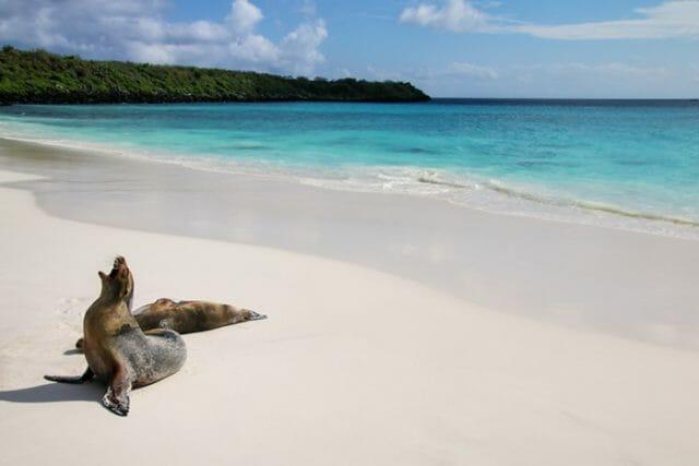 Bahia Gardner Beach Galapagos