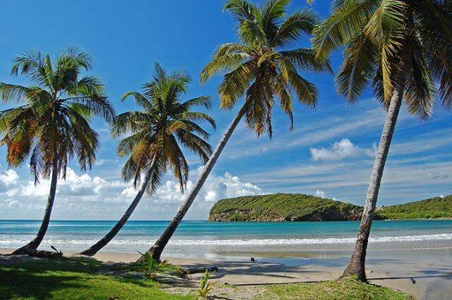Caribbean beach and palm trees