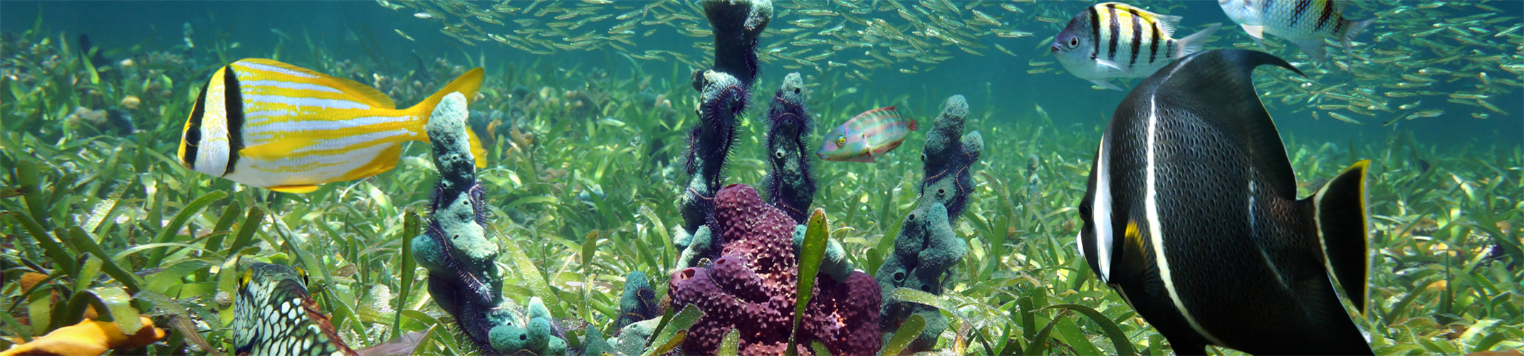 Best Diving in the Florida Keys