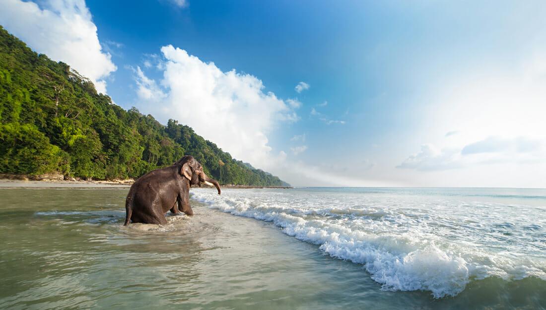 Elephant on a beach in Andaman Islands
