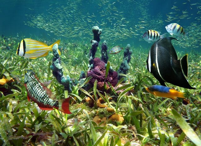 French Cay diving