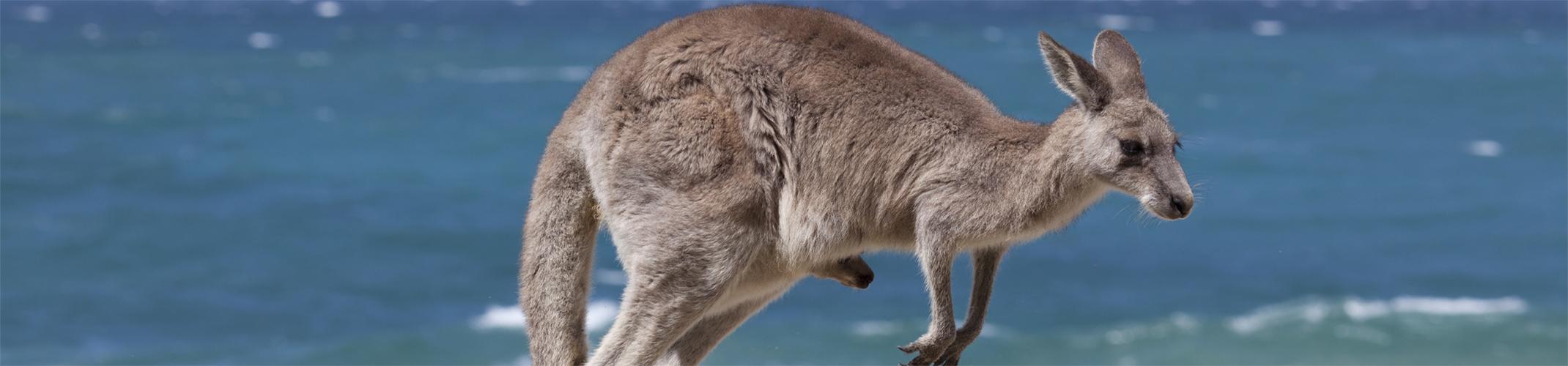 Australia Coastal Wildlife