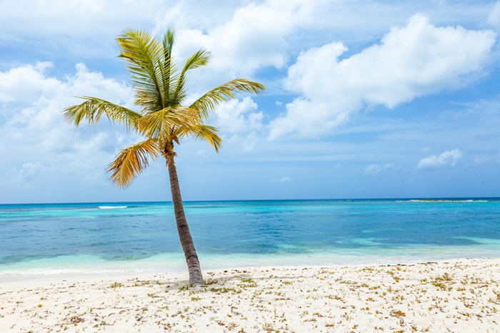 Mustique island beach and palm tree