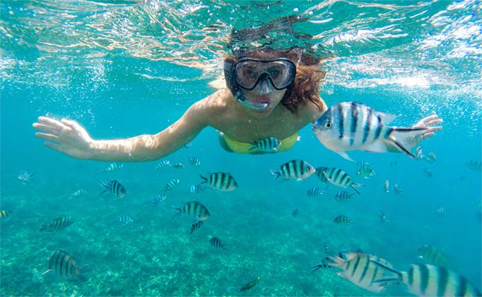 Norman island snorkeling