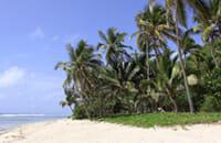 Peter Island palm trees