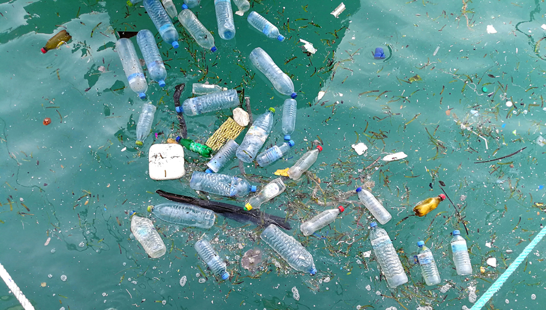 Plastic Pollution and Marine Life
