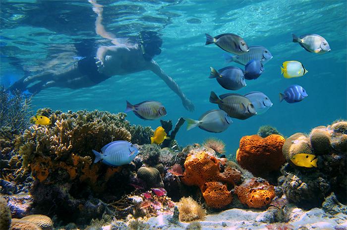 Ribbon Reef