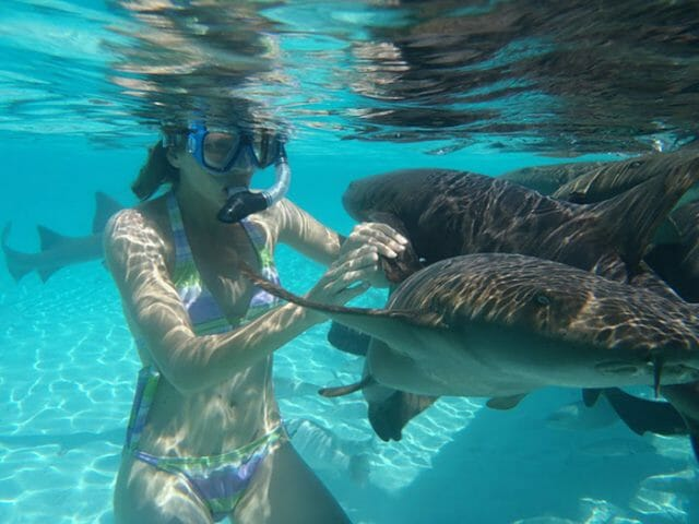 Swim with Nurse Sharks in the Bahamas | Worldwide Boat