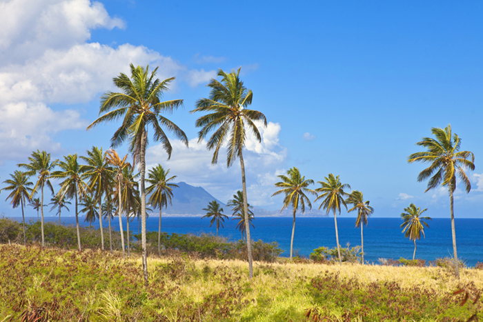 St Kitts palm trees