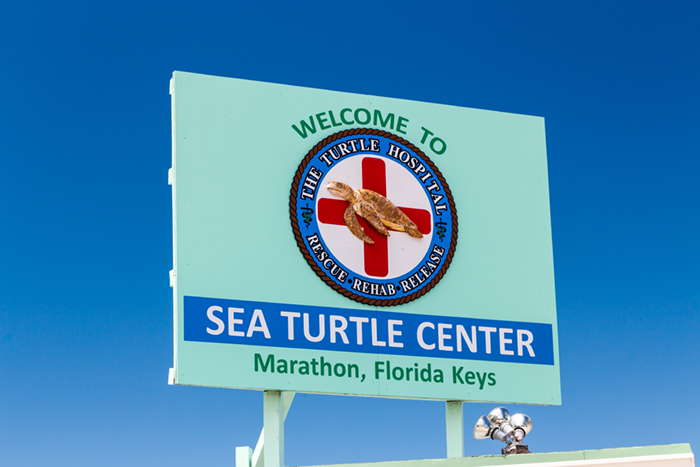 Turtle Center in Florida Keys