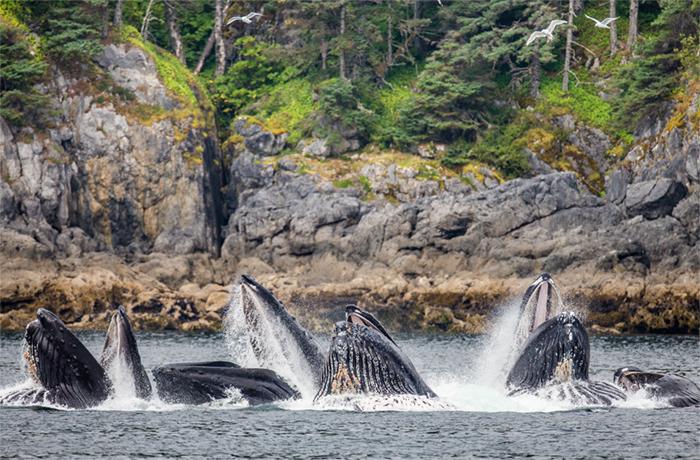 Whales in Chutnam Strait