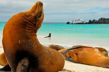 Majestic and sealions