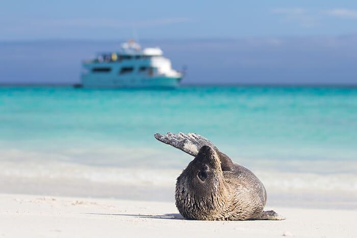 Stella Maris in the Galapagos